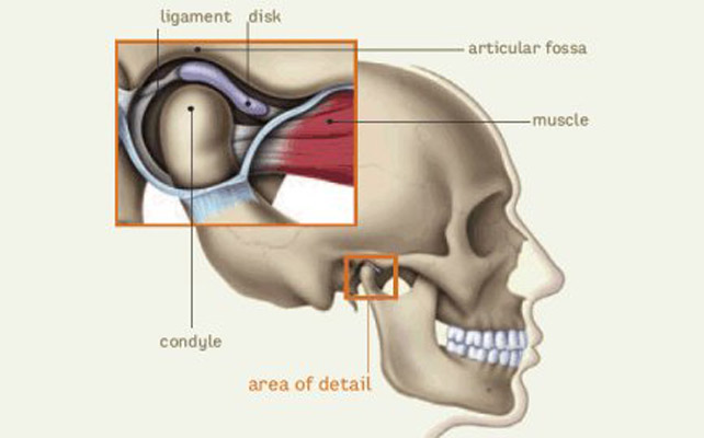 TEMPOROMANDIBULAR JOINT-What is it and how is formed?